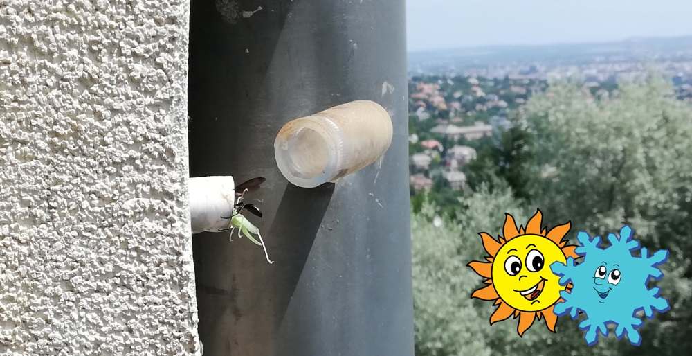 A darázs egy döglött szöcskétpróbála klíma kondenzcsövébe gyömöszölni.